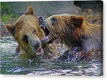 When Grizzlies Play Canvas Print