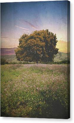 Cambria Canvas Print - When I Give My Heart by Laurie Search