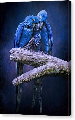 When I'm Feeling Blue Canvas Print by Brian Tarr