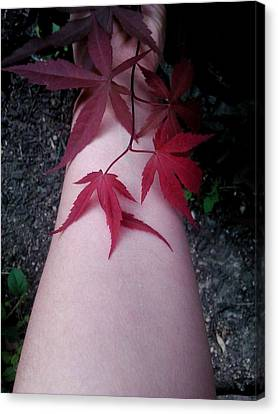 Canvas Print - When Life Gives You Japanese Maple Leaves... by Brynn Ditsche
