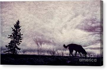 When Night Closes In Canvas Print