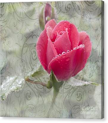 Drop Canvas Print - When The Dew Is On The Rose by Betty LaRue