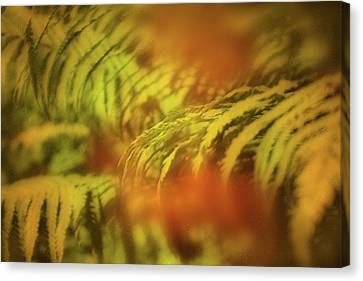 When The Fern Blooms? Canvas Print