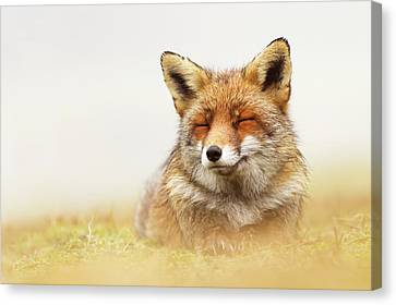 When The Lady Smiles - Red Fox Canvas Print by Roeselien Raimond