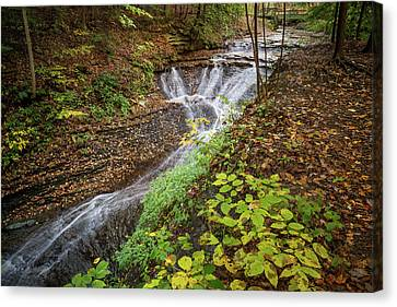 Canvas Print featuring the photograph When The Leaves Fall by Dale Kincaid