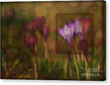 When The Light Paints The Flowers Canvas Print by Joy Gerow