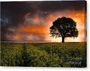 When The Sun Rose Canvas Print by Rawshutterbug