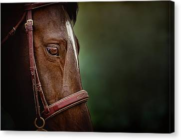 When You Look Into His Eye, What Do You See? Canvas Print by Debby Herold