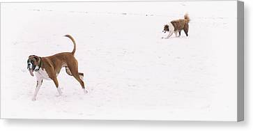 Boxer Canvas Print - When You See Snow For The First Time  by Martin Newman