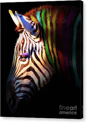 When Zebras Dream 7d8908 Vertical Canvas Print