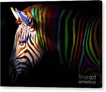 When Zebras Dream 7d8908 Canvas Print