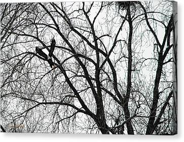 Where Eagles Fly Canvas Print by Donna Blackhall