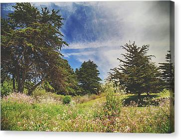Cambria Canvas Print - Where Fairies Play by Laurie Search