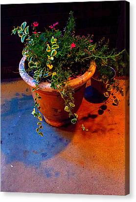 Canvas Print - Where Flowers Never Hide by Guy Ricketts