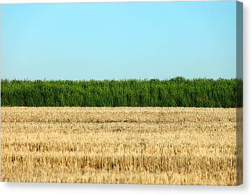 Where Land And Sky Meet Canvas Print by Todd Klassy