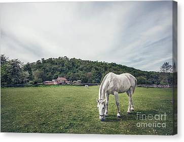 Where The Green Grass Grows Canvas Print by Evelina Kremsdorf
