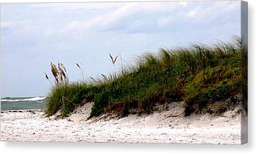 Where The Sea Wind Blows Canvas Print by Ian  MacDonald