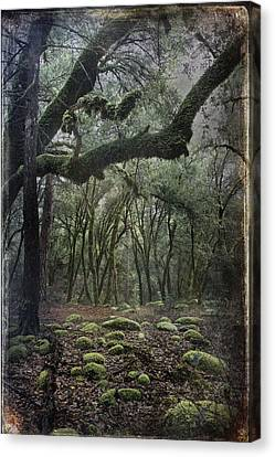 Where The Wild Hearts Roam Canvas Print by Laurie Search