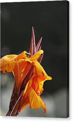 While Yet In Bloom Canvas Print by Richard Gordon