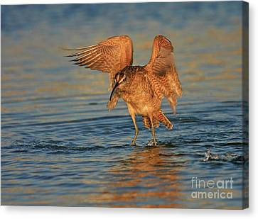 Whimbrel Colors Canvas Print