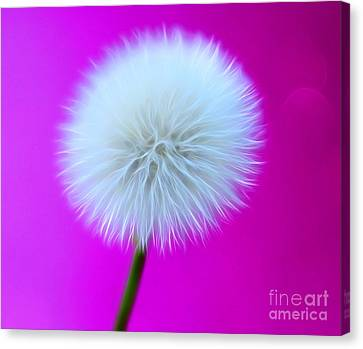 Whimsy Wishes Canvas Print by Krissy Katsimbras
