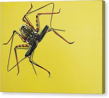 Whip Scorpion Canvas Print by Jude Labuszewski
