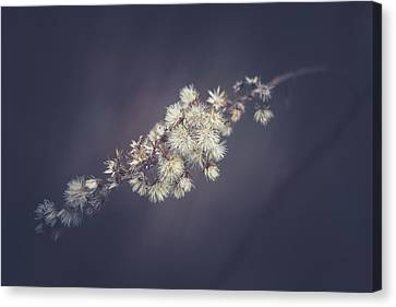 Canvas Print featuring the photograph Whip by Shane Holsclaw
