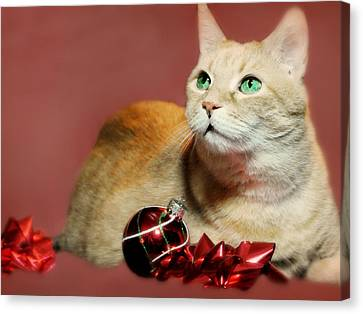 Marble Eyes Canvas Print - The Christmas Cat by Diana Angstadt