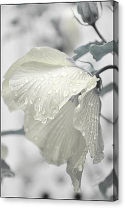 Whisper In Pearlwhite Canvas Print