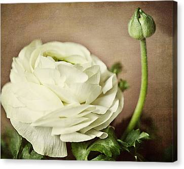 Whisper Canvas Print by Lisa Russo