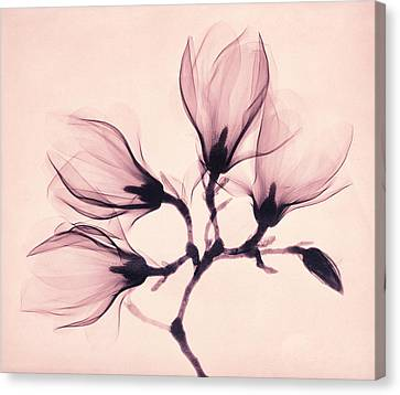 Whisper Magnolia Canvas Print by Mindy Sommers