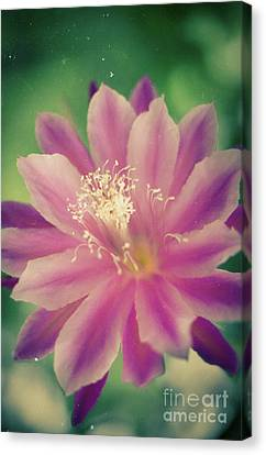 Canvas Print featuring the photograph Whisper Of Color by Ana V Ramirez