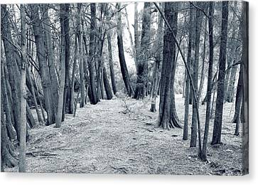 Canvas Print featuring the photograph Whispering Forest by Wayne Sherriff