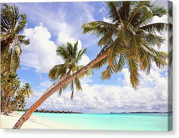 Whispering Palms. Maldives Canvas Print by Jenny Rainbow