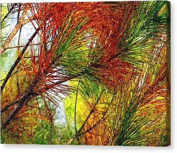 Whispering Pines  Canvas Print by David Dehner