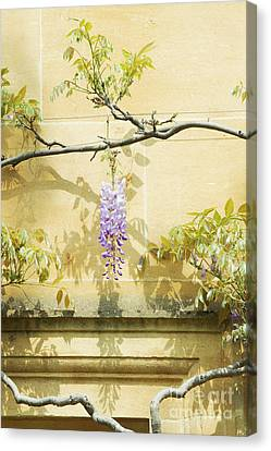 Whispering Wisteria Canvas Print