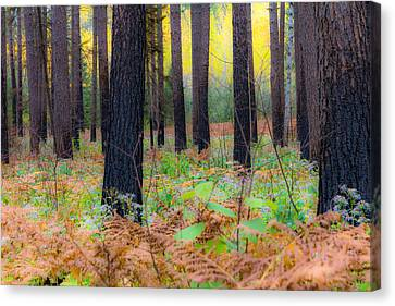 Whispering Woods Canvas Print by Mary Amerman