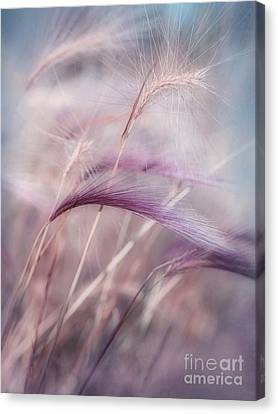 Pioneers Canvas Print - Whispers In The Wind by Priska Wettstein