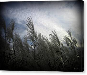 Whispers In The Wind Canvas Print by Trina Prenzi