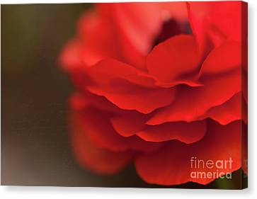 Whispers Of Love Canvas Print by Beve Brown-Clark Photography
