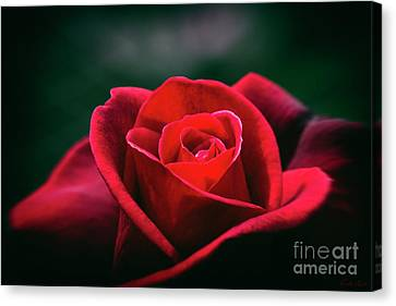 Canvas Print featuring the photograph Whispers Of Passion by Linda Lees