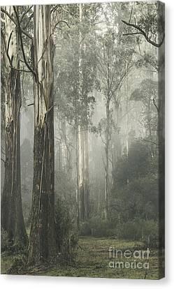 Whist Canvas Print by Andrew Paranavitana
