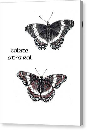 White Admiral Butterfly Canvas Print by Betsy Gray