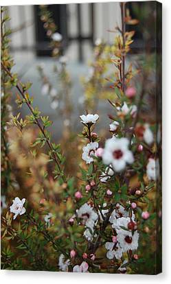 White Amidst It All Canvas Print by Jean Booth