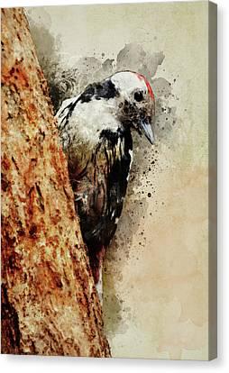White And Black Woodpecker Canvas Print