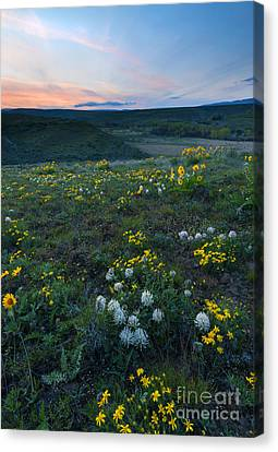 White  And Gold Canvas Print by Mike Dawson