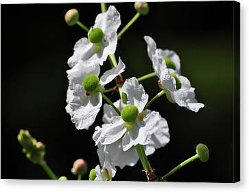 White And Green Wildflowers Canvas Print