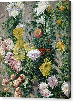 White And Yellow Chrysanthemums Canvas Print
