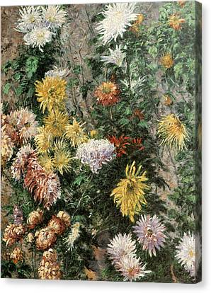 Gennevilliers Canvas Print - White And Yellow Chrysanthemums In The Garden At Petit Gennevilliers by Gustave Caillebotte
