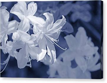 Canvas Print featuring the photograph White Azalea Flowers Blues by Jennie Marie Schell